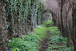 Path passing through tunnel formed by vegetation, Alderton, Suffolk, England, UK