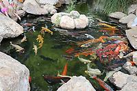 Kois im Aquarium von Palma de Mallorca - Palma de Mallorca 26.05.2019: Aquarium von Mallorca in Plama