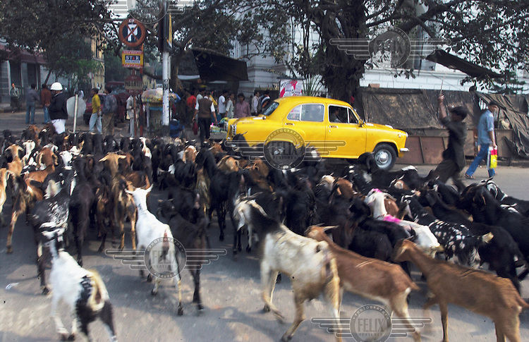 A farmer walks his goats through the centre of the city to market.