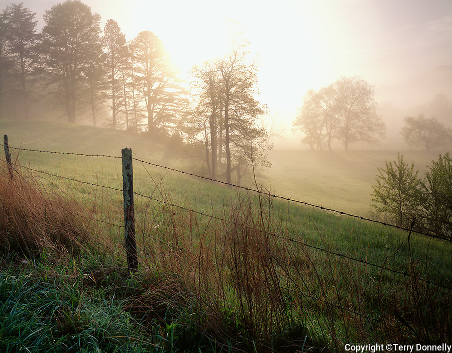 Great Smoky Mts. National Park, TN/NC<br /> Spring trees and and barbed wire fence in morning fog - Cades Cove
