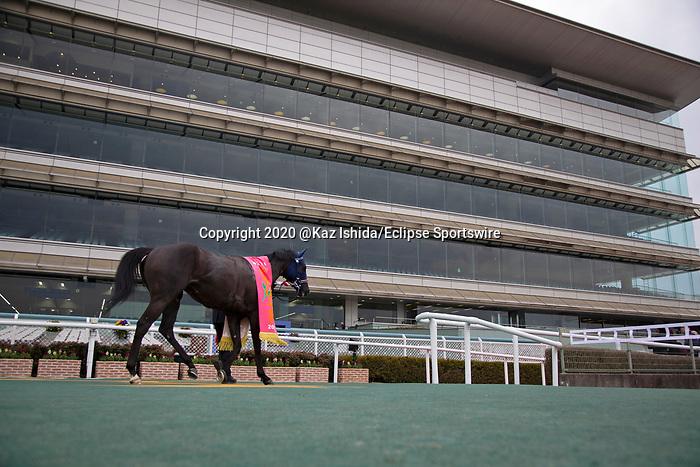 TAKARAZUKA,JAPAN-MAR 07: Maltese Diosa,ridden by Hironobu Tanabe, after winning the Tulip Sho at Hanshin Racecourse on March 7,2020 in Takarazuka,Hyogo,Japan. Kaz Ishida/Eclipse Sportswire/CSM