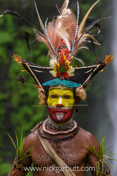 hief Timon Tumbu Huli Wigman in traditional / ceremonial dress with plumes of Birds of Paradise, parrots and lorikeets. Tari Valley, Papua New Guinea.