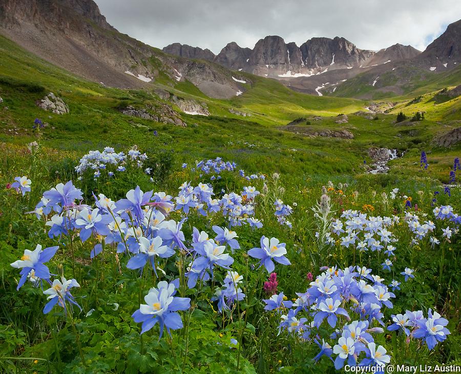 San Juan Mountains, CO<br /> American Basin with Colorado columbine (Aguilegia coerulia) and wildflower meadows beneath Handies Peak with sun breaking through low clouds.
