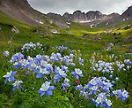 San Juan Mountains, CO<br /> American Basin with Colorado columbine (Aguilegia coerulia) and wildflower meadows beneath Handies Peak with sun breaking through low clouds.