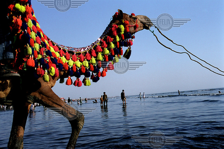 A decorated camel next to the Gaddani ship-breaking yard.