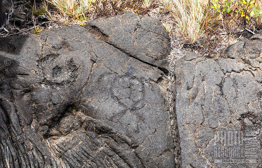 Turtle (honu) petroglyph at the Pu'u Loa Petroglyph Field in Hawai'i Volcanoes National Park, Big Island.