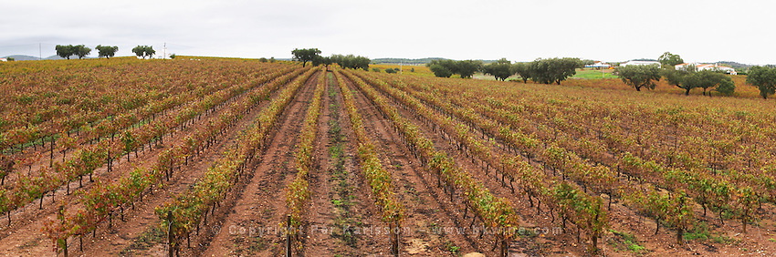 Vineyard. View from the winery terrace. J Portugal Ramos Vinhos, Estremoz, Alentejo, Portugal