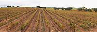 Vineyard. View from the winery terrace. J Portugal Ramos Vinhos, Estremoz, Alentejo, Portugal