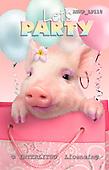 Samantha, ANIMALS,  photos,+pigs,++++,AUKPLP110,#A# Humor, lustig, divertido