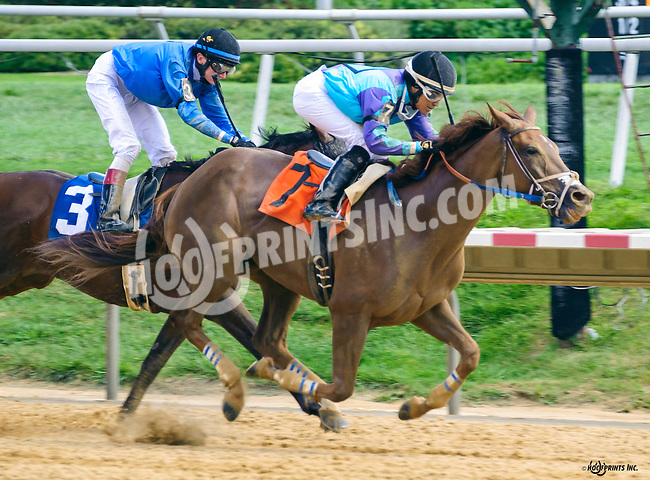 Purim's Gold winning at Delaware Park on 8/22/16