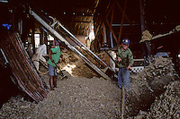 France/DOM/Martinique/Distillerie du Simon: Ramassage de la bagasse (fibres restant après extraction du jus) qui sert de combustible pour alimenter les fours qui transforment l'eau en vapeur