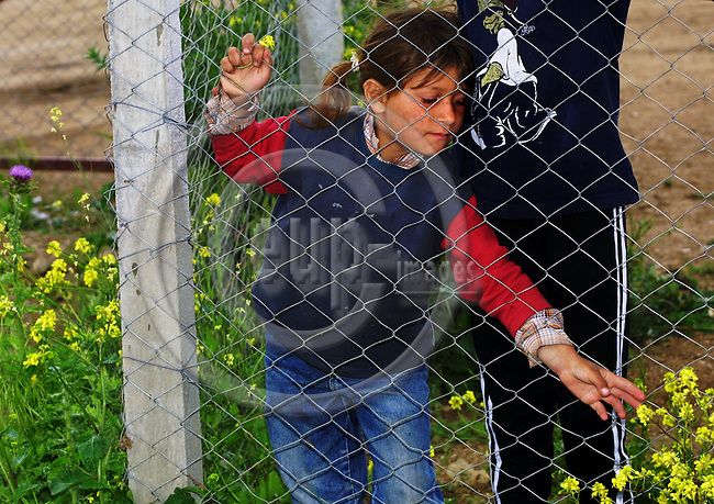 """MACEDONIA / SKOPJE, 10 MAY 2001--A Kosovar Roman girl picking flowers through the fence of the refugee camp """"Suto Orizari"""" in the outscirts of Skopje. The Kosovar Romans fled to Macedonian during the Kosovo war and have been staying in the UNHCR refugee camp, in poor conditions since 1999. Today in the camp are still around 1300 Kosovar Roman refugees. -- PHOTO: JUHA ROININEN / EUP-IMAGES"""