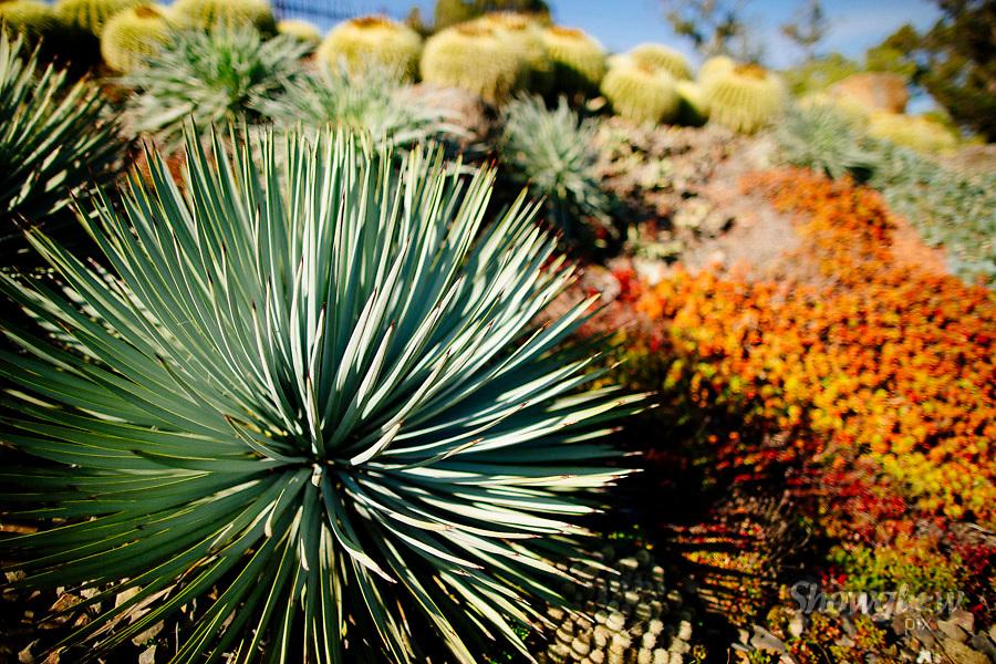 Image Ref: M297<br /> Location: Royal Botanical Gardens, Melbourne<br /> Date: 10.06.17