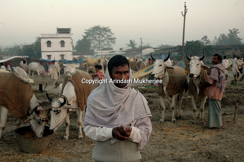 A cattle owner with his cattles at Sonepur fair ground. Bihar, India, Arindam Mukherjee