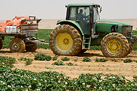EGYPT, Farafra, potato farming in the desert, chemical fertilizer and phosphoric acid are added with the Pivot circle irrigation, the fossile groundwater from the Nubian Sandstone Aquifer is pumped from 1000 metres deep wells  / AEGYPTEN, Farafra, United Farms, Kartoffelanbau in der Wueste, die kreisrunden Felder werden mit Pivot Kreisbewaesserungsanlagen mit fossilem Grundwasser des Nubischer Sandstein-Aquifer aus 1000 Meter tiefen Brunnen bewaessert, der Bewaesserung werden chemische Duenger und Phosphorsaeure zugesetzt