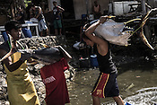 Workers carry the sustainably caught tuna to a buying unit in Puerto Princesa, Palawan in the Philippines. <br /> Photo: Sanjit Das/Panos for Greenpeace