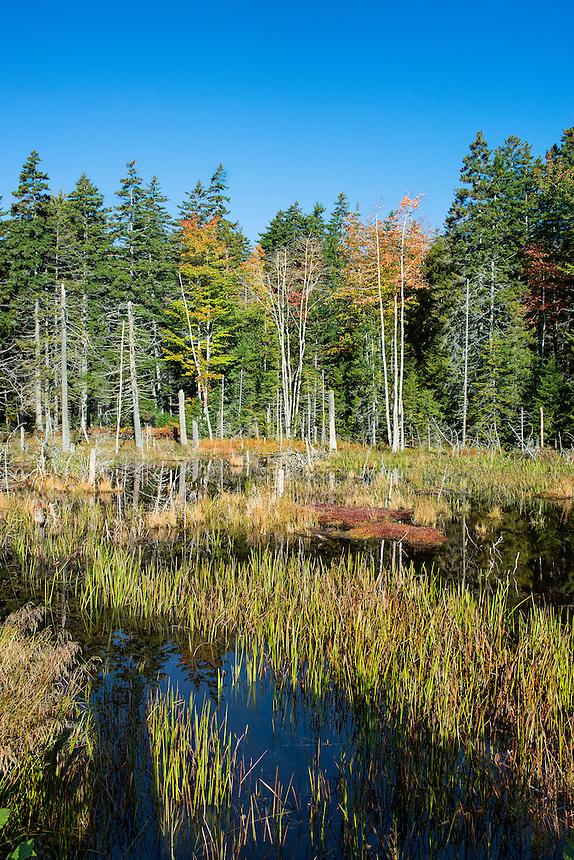 Marsh scenic, Acadia National Park, Maine, USA