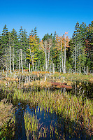 Marsh scenic, Acadia National Park, Maine, USA