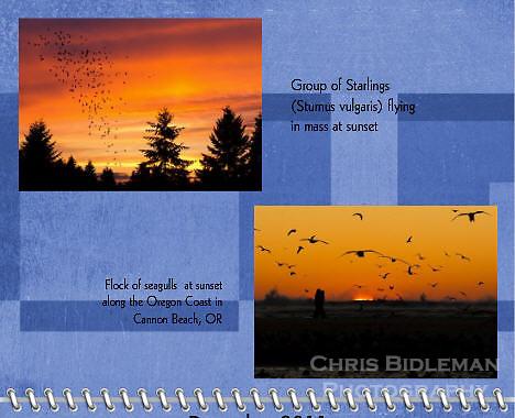 December 2011 Birds of a Feather Calendar