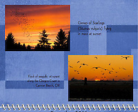 December 2011 Birds of a Feather Calendar