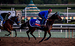 October 30, 2019: Breeders' Cup Filly & Mare Turf entrant Castle Lady, trained by Henri Alex Pantall, exercises in preparation for the Breeders' Cup World Championships at Santa Anita Park in Arcadia, California on October 30, 2019. Carolyn Simancik/Eclipse Sportswire/Breeders' Cup/CSM
