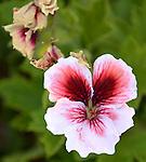 August Garden Mix