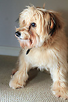 Bonnie the Dog Hair Dye 18/2/12