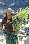 Woman Carrying Grasses