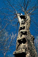 A hunter's lookout site built onto the top of a tree.