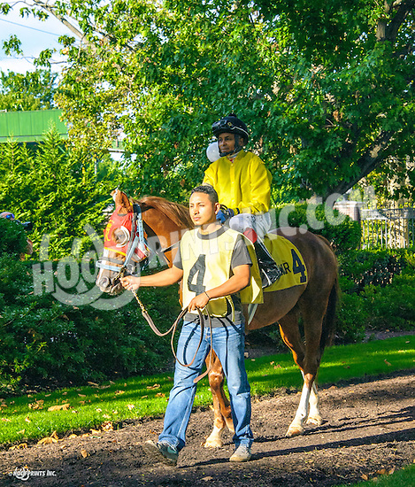 RB Open Fire before The Arabian Juvenile Championship (grade 3) at Delaware Park on 9/24/16