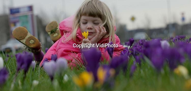 Foto: VidiPhoto..ELST - Door het zachte winterweer schieten de krokussen als paddestoelen uit de grond, zoals hier in het Betuwse Elst. De uitbundig bloeiende bloemen oefenen de nodige aantrekkingskracht uit op kinderen uit de buurt. Het zachte weer blijft voorlopig aanhouden.
