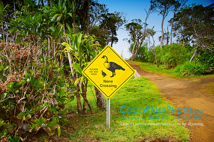 Nene Crossing - Please Do Not Feed sign at Kalalau Valley Lookout, Nene or Hawaiian Goose, Branta ( = Nescochen ) sandvicensis, endemic to Hawaii and severely endangered, Na Pali coast, Kauai, Hawaii