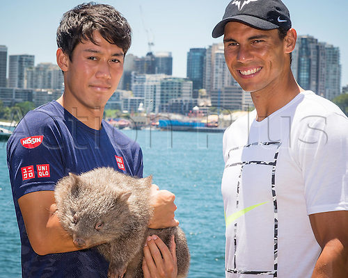 09.01.2017 Sydney, Australia.  (L-R) World No.5 Kei Nishikori (JPN) and World No. 9 Rafael Nadal (ESP) pictured holding native Australian Wombat 'Lola' at a media call prior to the FAST4 Showdown Australian versus Rest of the World team  to be played at the International Convention Center in Sydney. Fast4 Tennis has been described as the Tennis version of cricket's Twenty20.