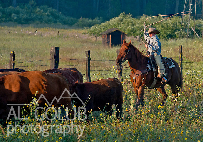 Cowboy Photography Workshop   Erickson Cattle Co. ..Wyatt Hansen .. Photo by Al Golub/Golub Photography