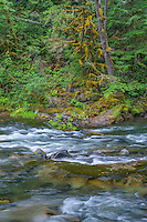 ORCAN_D202 - USA, Oregon, Mount Hood National Forest, Salmon-Huckleberry Wilderness, Salmon River, a federally designated Wild and Scenic River and surrounding forest.