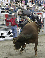 "29 August, 2004:  PRCA Rodeo Bull Rider Vic Dubray  riding the bull ""Red One"" during the PRCA 2004 Extreme Bulls competition in Bremerton, WA."