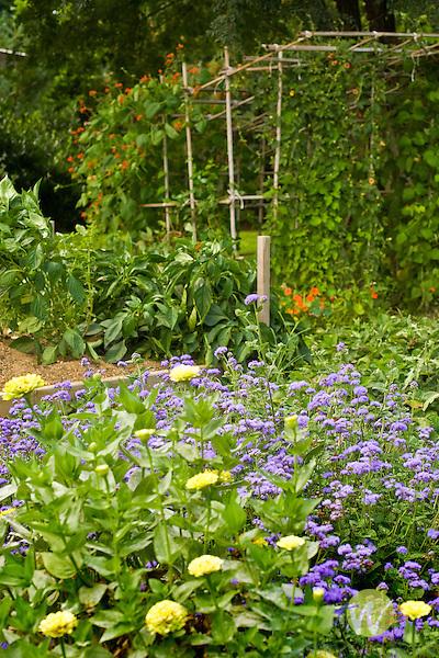 Late summer garden.
