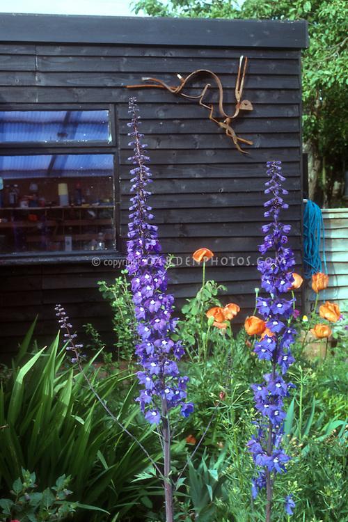 Shed, Rabbit hare ornament, purple delphinium in bloom