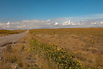 Idaho, Southwestern, Canyon County, Caldwell. Grasslands on the Curlew birding preserve in late summer.