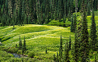 Paradise Meadows, Mount Rainier National Park, Washington