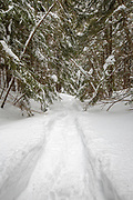Fresh snowshoe tracks in forest after a dusting of snow in Lincoln, New Hampshire USA.