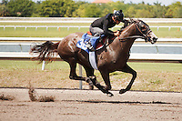 #38Fasig-Tipton Florida Sale,Under Tack Show. Palm Meadows Florida 03-23-2012 Arron Haggart/Eclipse Sportswire.