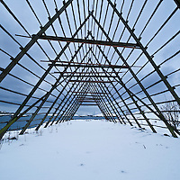 Empty cod drying racks in snow, Lofoten islands, Norway