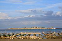 France, Normandie, Manche (50),Saint-Vaast-La-Hougue, ile Tatihou, huitres conchlyliculture // France, Normandy, Manche, Saint Vaast la Hougue, oysters farms