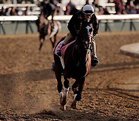 LOUISVILLE, KENTUCKY - MAY 03: Paradise Woods, owned by Herman Sarkowsky and Martin J. Wygod and trained by Richard E. Mandella, exercises in preparation for the Kentucky Oaks at Churchill Downs on May 3, 2017 in Louisville, Kentucky. (Photo by Jon Durr/Eclipse Sportswire/Getty Images)