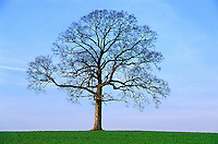 Solitary tree without leaves.