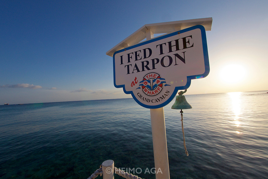 Grand Cayman. The Wharf restaurant. Daily Tarpon feeding.