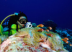 Black footed anemonefish colonies with diver