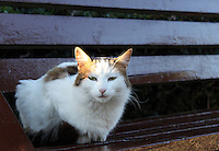 Stock image of cute white cat sitting on a wooden bench.