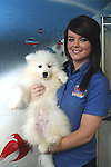 Samoyed puppy at the Pet Centre, Boyne Shopping Centre, Drogheda...Photo NEWSFILE/Jenny Matthews.(Photo credit should read Jenny Matthews/NEWSFILE)....This Picture has been sent you under the condtions enclosed by:.Newsfile Ltd..The Studio,.Millmount Abbey,.Drogheda,.Co Meath..Ireland..Tel: +353(0)41-9871240.Fax: +353(0)41-9871260.GSM: +353(0)86-2500958.email: pictures@newsfile.ie.www.newsfile.ie.FTP: 193.120.102.198.